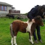 Baby Pony!