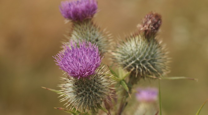 A week in Scotland's West Highlands