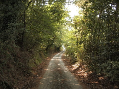 Path from our villa to Ostra Vetere