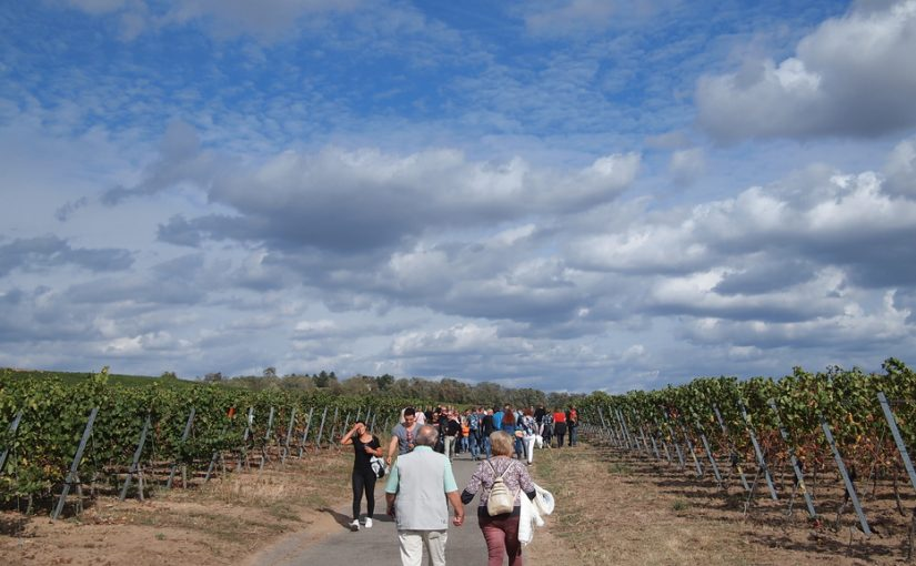 Kulinarische Weinwanderung Freinsheim die Vierte