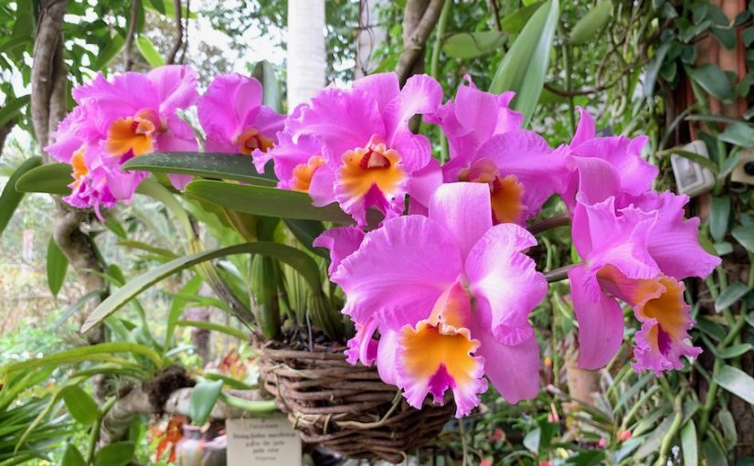 Fun Things to do around Puerto Vallarta:  Botanical Gardens